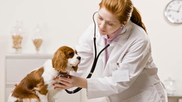 expert comptable veterinaire